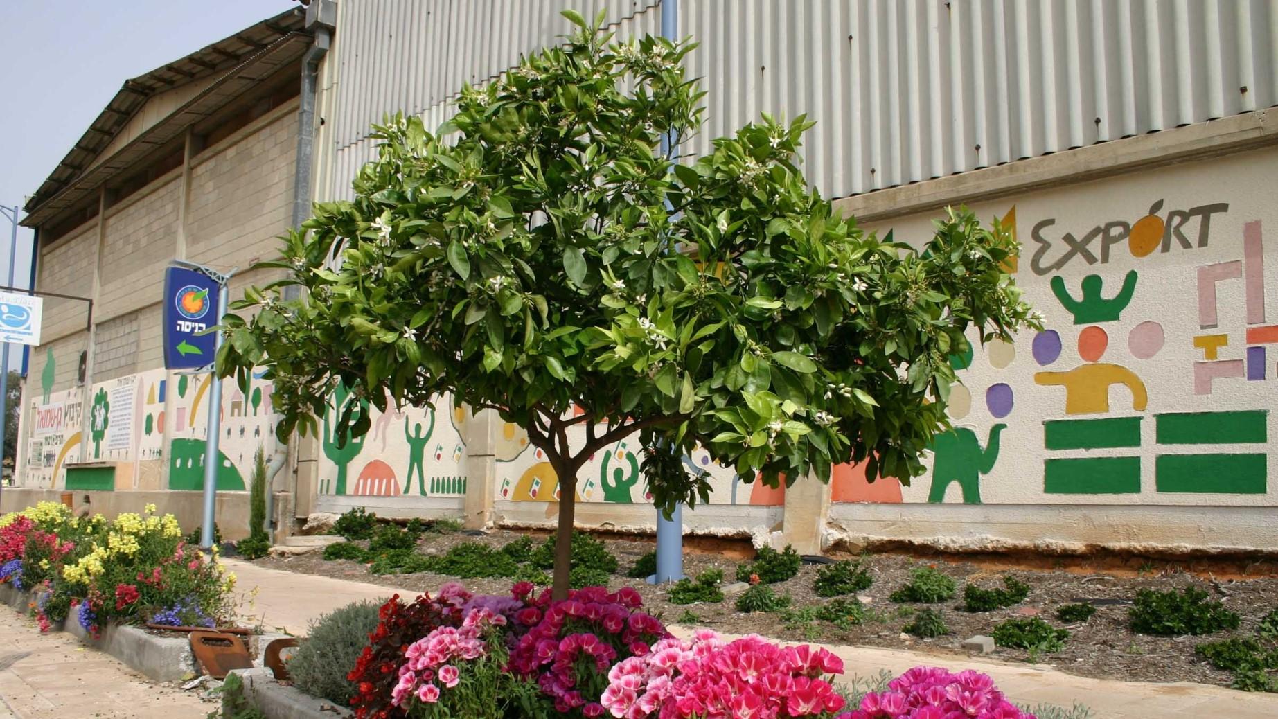 טיילת וכניסה לאולם התרבות גן שמואל 2013
